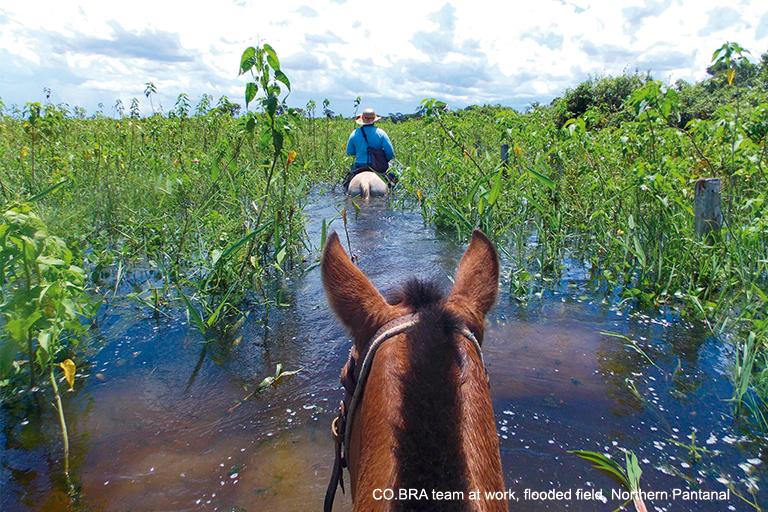 Pantanal_flood_period